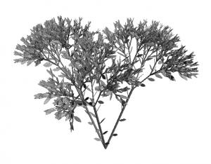 Przykładowa roślina, jaką udało nam się wygenerować na podstawie pewnego systemu Lindenmayera